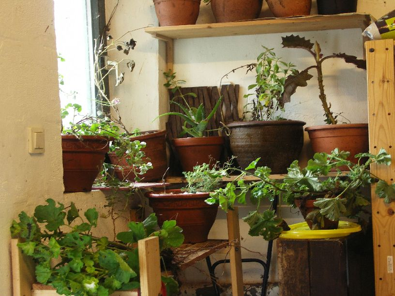 pflanzen berwintern. Black Bedroom Furniture Sets. Home Design Ideas