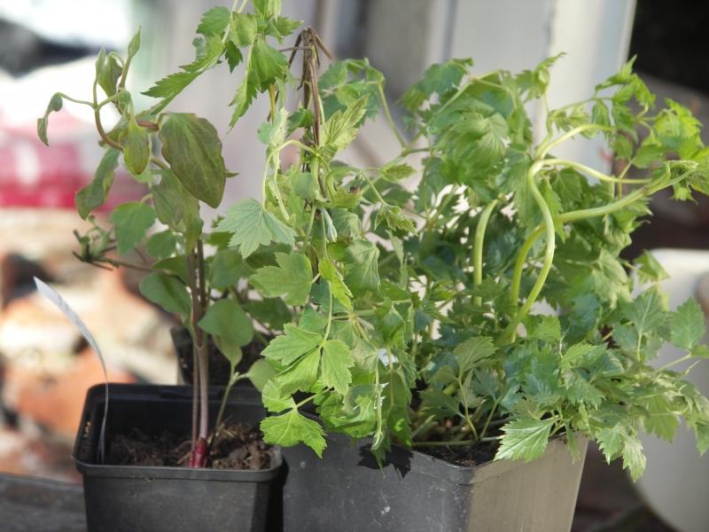 [Bild: Neue_Pflanzen_20120408.jpg]